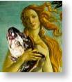 Venus with Cod